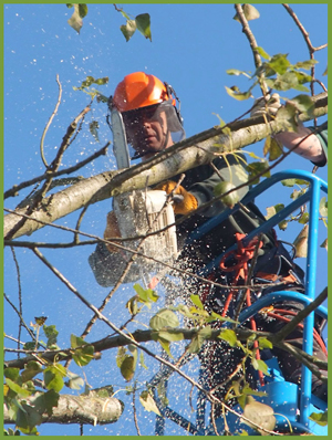 SP Landscapes and Tree Contracors