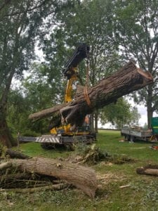 Fallen Willow being removed from river using a crane